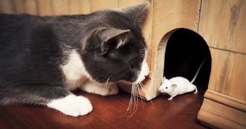 cats-and-mouse