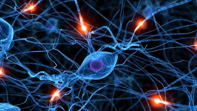 nöral bağlantı