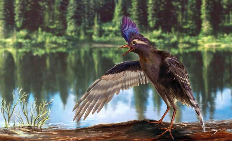 Archaeornithura meemannae / Japan Times