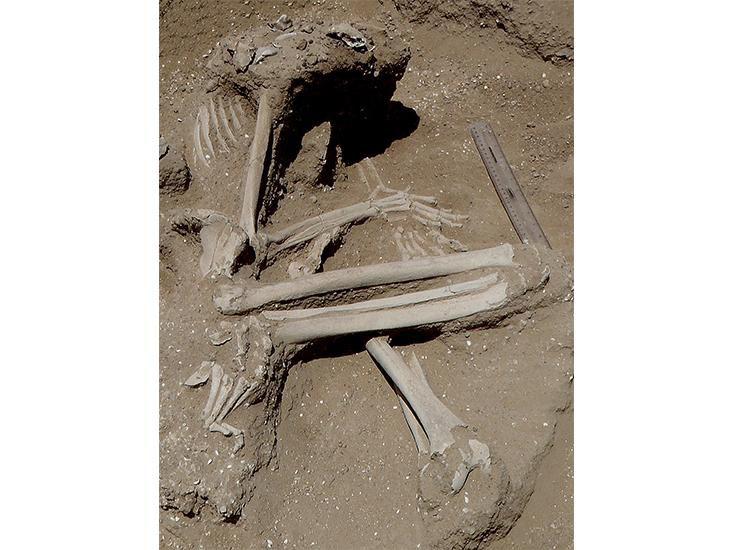 Bu kadın iskeleti, sol dirseğine dayanmış şekilde bulundu; dizlerinde ve muhtemelen sol ayağında kırıklar var. Ellerinin şekli, bileklerinden bağlanmış olabileceğini düşündürüyor. (Marta Mirazon Lahr)