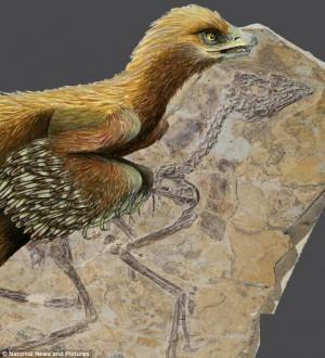 150 milyon önce yaşamış The Aurornis xui